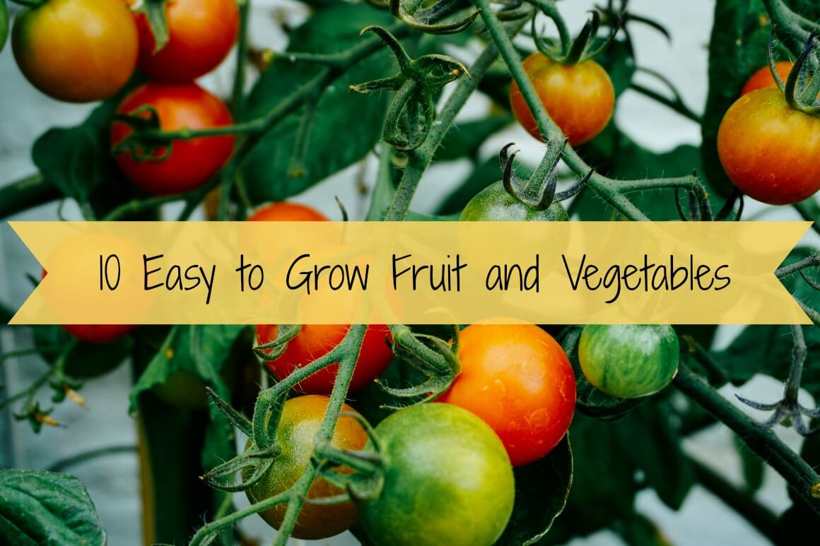 10 easy to grow fruit and vegetables gypsy soul for What vegetables to grow