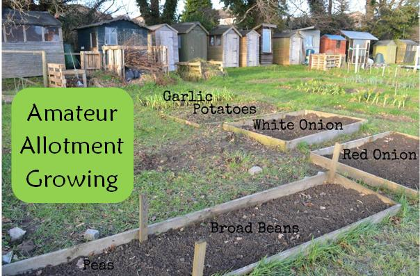 Amateur Allotment Growing