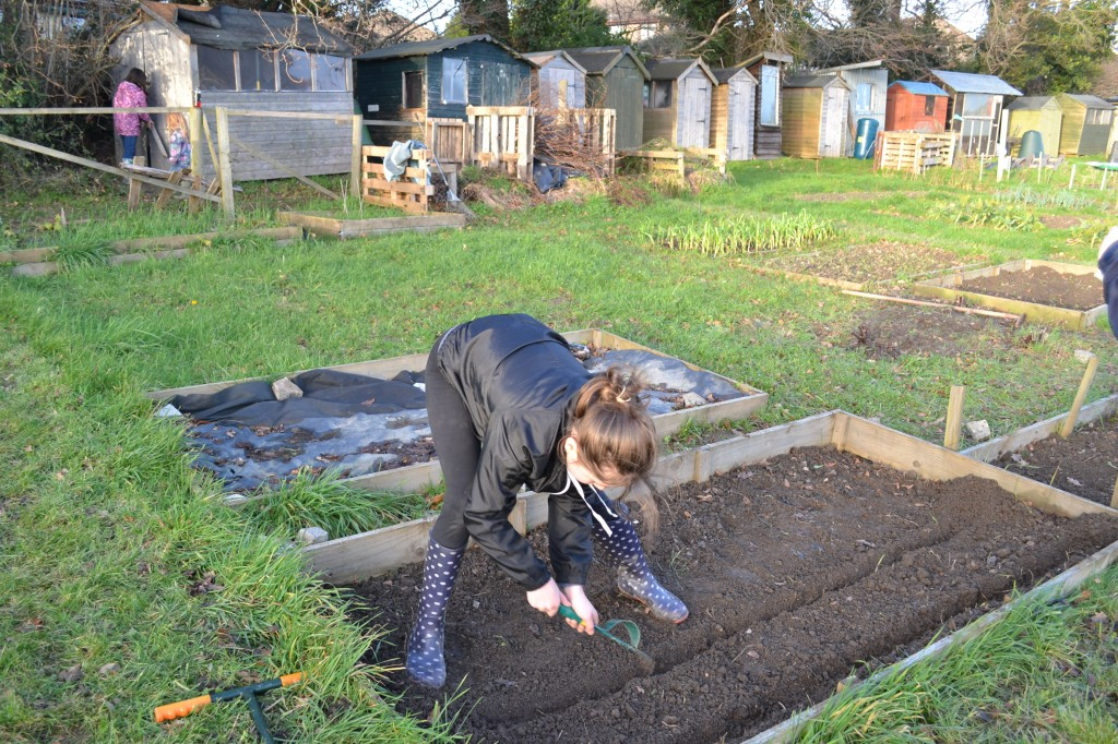 Allotment Growing