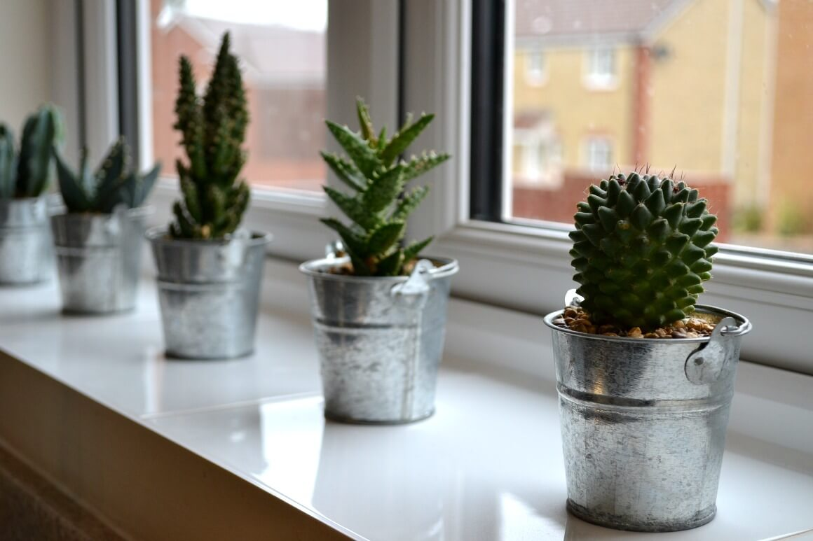 Simple Living - succulents