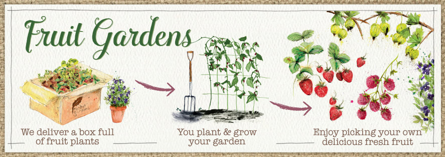 Fruit gardens by post from Rocket Gardens