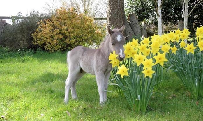 Miniature Pony Centre
