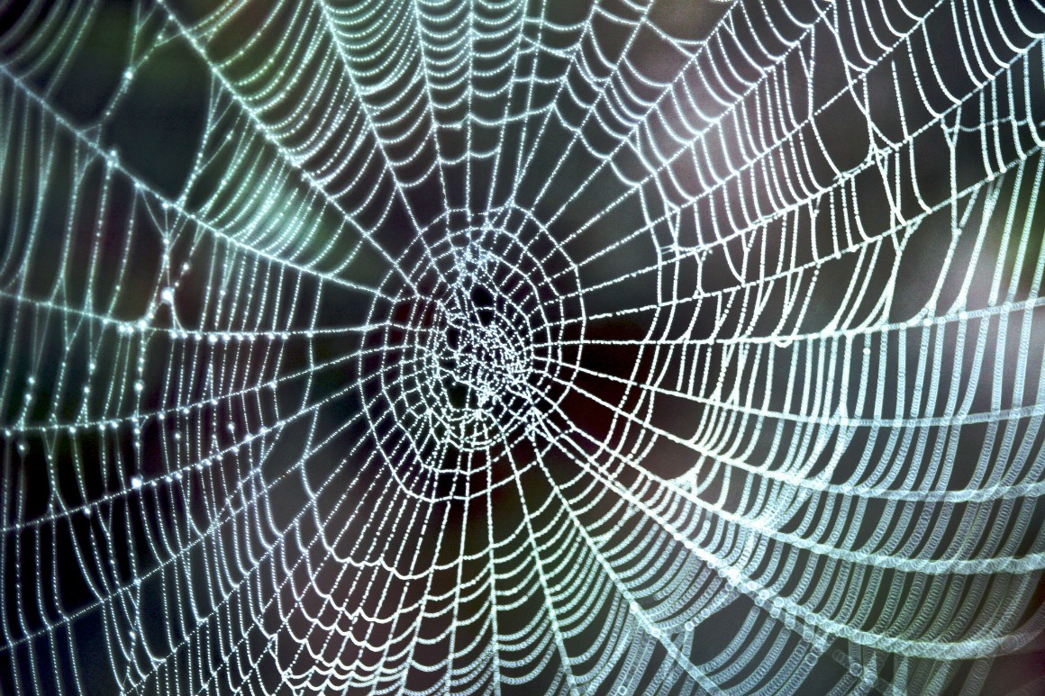 The Web of Life. Image Credit: s9-4pr Flickr