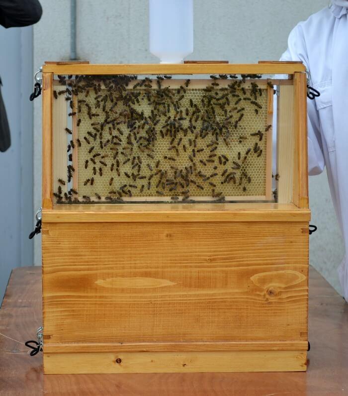 Beekeeping in Exeter