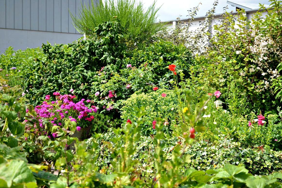 roof top garden in Exeter