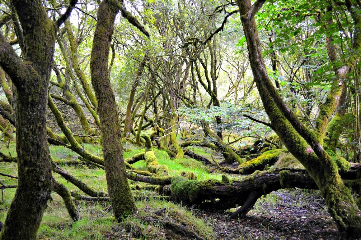 Fernworthy reservoir forest