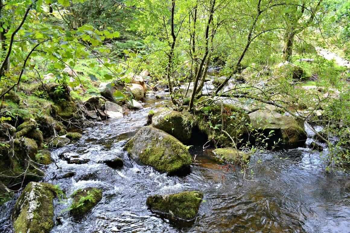 The river at Fernworthy Reservoir