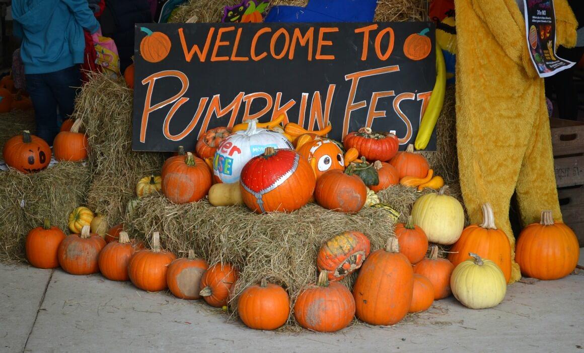 Pumpkin fest at Lifton Farm Shop in Devon