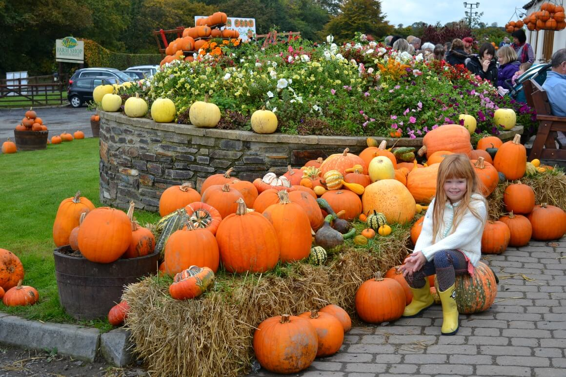Pumpkin heaven at Lifton Farm shop in Devon