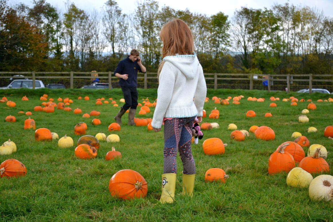Pumpkin patch in Devon