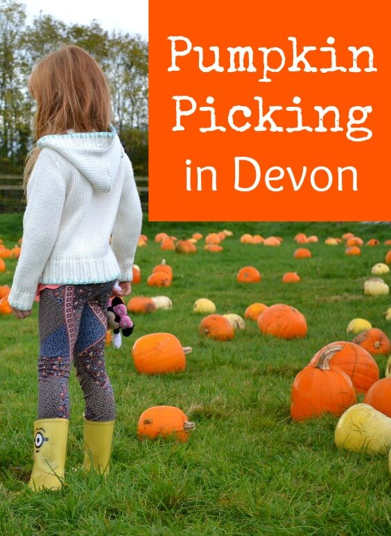 Pumpkin picking in Devon