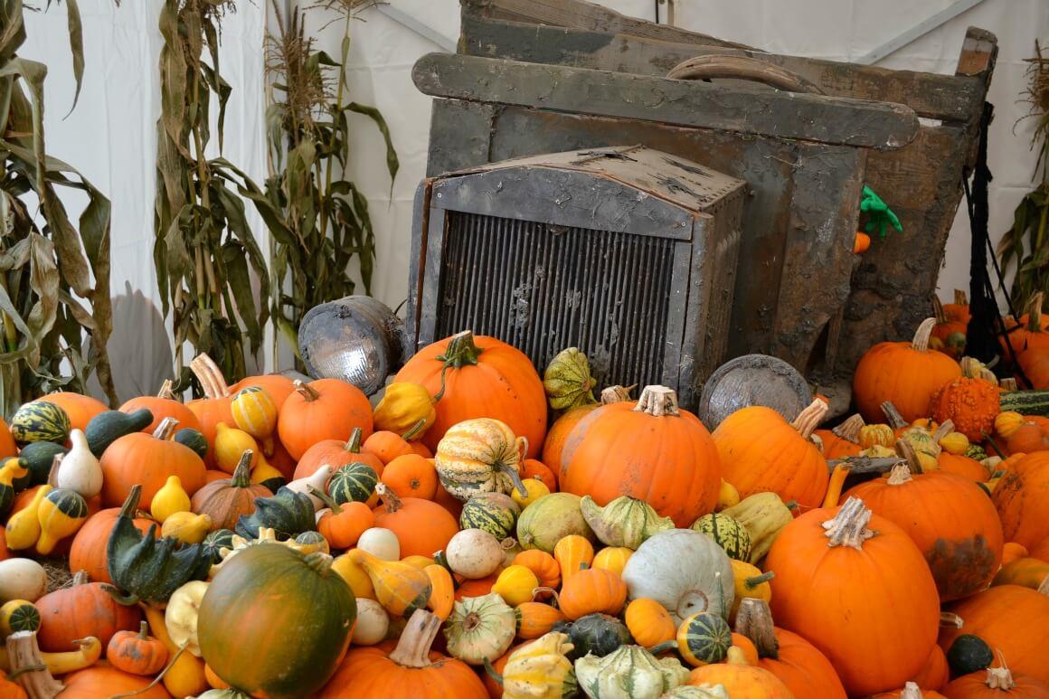 Pumpkins galore in Devon