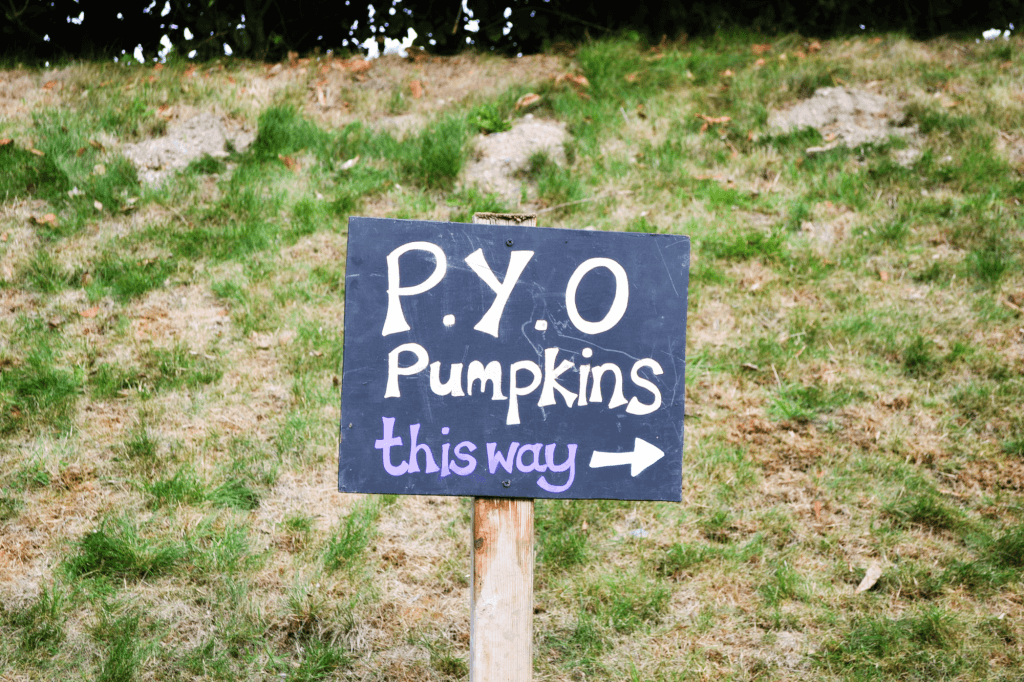 P.y.o pumpkins in Devon