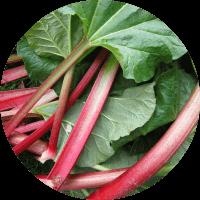 Grow your own rhubarb