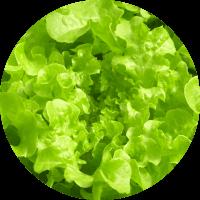 Grow your own salad