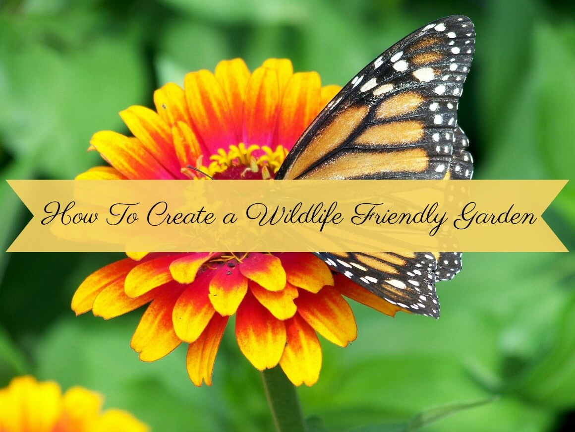 How to create a wildlife friendly garden