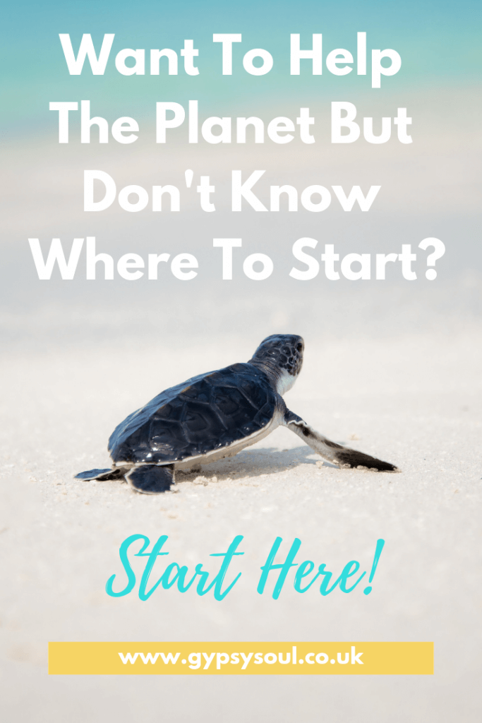 Want t o help the planet but don't know where to start? Start here! #ecoliving #sustainablelifestyle #bethechange