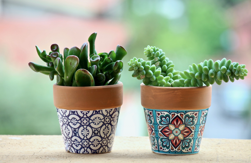 Potted plants for Mother's Day