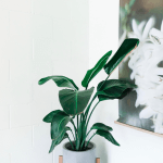 Not Sure Where to Start with Minimalism and Intentional Living?